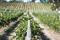 we believe that exceptional wines are made in the vineyard